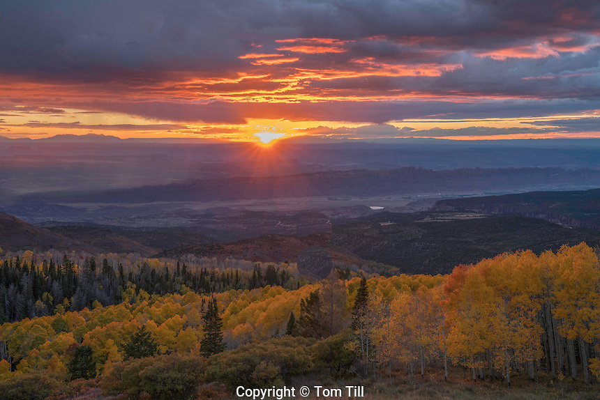 Aspen at sunset, La Sal Mountains, Utah Manti-La Sal National Forest   Quaking aspen,  Populus tremuloides