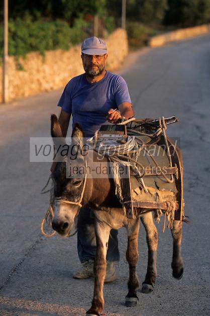 Europe/Croatie/Dalmatie/ Ile de Vis/ Komiza: Vigneron rentrant des vendanges avec son mulet