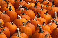 Pumpkins at a fall festival in Central New York.