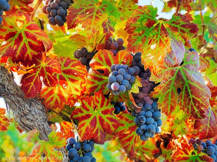 Harvest Season III