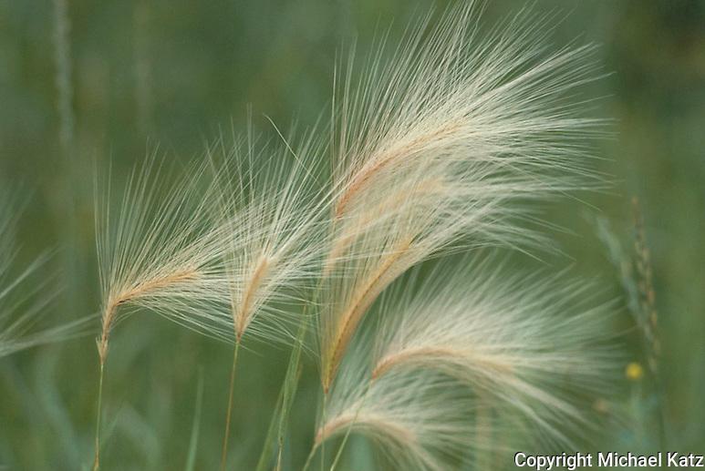 Against The Grain, Minnesota