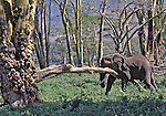 "Watched this elephant about 10 minutes scratching itself on the downed tree limb. Was at the floor level of the Ngorongoro Crater, Tanzania.  Members of Africa's ""Big Five"" and ""Big Nine"" mammals as a measure of Safari sightings."