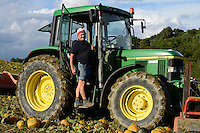 Austria Styria, cultivation of pumpkin, the seeds are used for processing of pumpkin seed oil, harvest with John Deere tractor, after pushing together the pumpkins will be picked up with spiked roller tool and the seeds will separated from fruit / Oesterreich Steiermark, Anbau von Kuerbis und Verarbeitung zu Kuerbiskernoel, Ernte mit John Deere Traktor bei Landwirt Alois Thie (im Portraet) in Oberlamm