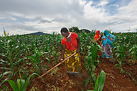 BRAC PROJECT, GPAF project (Global Poverty Action Fund). Agriculture project, women working in maize cornfields. Collective crop demonstration, 8 women 8 acres, work together to <br /> produce corn. Miriam Canda, farmer, and group.