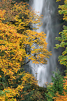 Mutltnomah Falls in Coumbia River Gorge National Scenic Area, Oregon