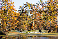 63895-14211 Baldcypress trees in fall, Horseshoe Lake State Fish and Wildlife Areas, Alexander Co., IL