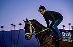 October 29, 2019 : Breeders' Cup Juvenile Turf Sprint entrant Chimney Rock, trained by Michael J. Maker, exercises in preparation for the Breeders' Cup World Championships at Santa Anita Park in Arcadia, California on October 29, 2019. Scott Serio/Eclipse Sportswire/Breeders' Cup/CSM