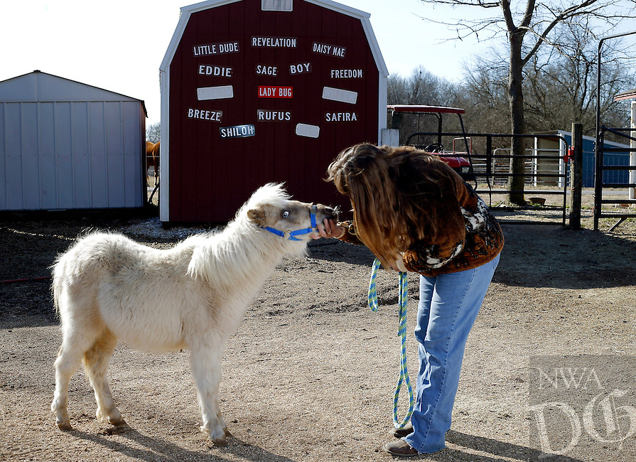 NWA Democrat-Gazette/JASON IVESTER<br /> Rebecca Christians talks with Luca, a 9-month-old miniature horse, at Autumn&rsquo;s Reride, a horse rescue farm that serves youth with disabilities, impairments, or emotional issues, Friday, Feb. 3, 2017, at the Bentonville farm.