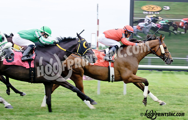 Mythical Hero winning at Delaware Park racetrack on 6/21/14