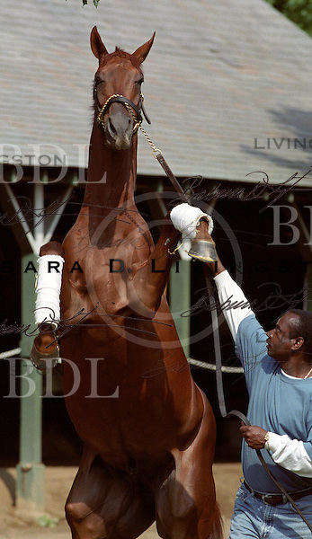 Funny Cide Enjoying His Down Time At Saratoga Race Course 2003