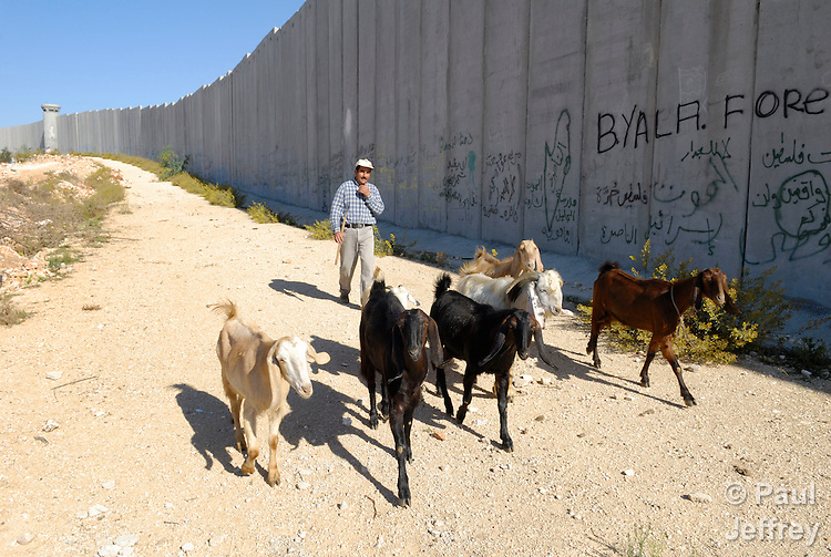 A Palestinian man herds his goats in front of the Israeli separation wall in Bethlehem.