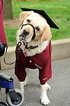 Therapy dog at graduation