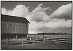 Scan of vintage print. Negative file #75-278. Miller barnyard and barn with cow. 1975 Petersburg, PA. 1 of 1