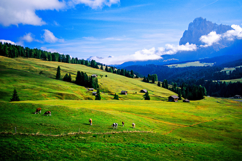 Seiser Alm (Alpe di Siusi), Sudtirol Region, Dolomites, Northern Italy
