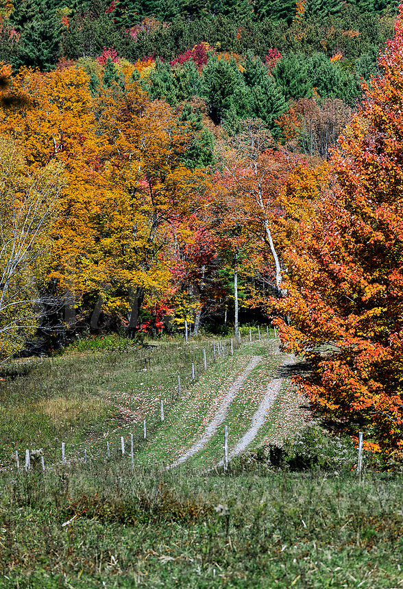 Unpaved country road, Stowe, Vermont, USA.
