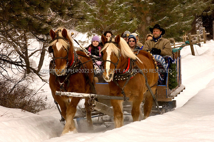 1/14/2007--Leavenworth, WA, USA..Visitors to Leavenworth,WA, enjoy a sleigh ride at Red-Tail Canyon Farm in Leavenworth. Leavenworth sits beside the Wenatchee River about 2 hours drive west of Seattle. Fifty years ago Leavenworth, like many other former logging boom towns across the Northwest, had boarded up buildings and a bleak future. Then a small group of visionaries landed on the idea of transforming the town into an Alpine theme town. Beginning in the 1960s facades on Front Street were made over in the style of a south German mountain town, and despite Central Washington's paucity of Germans, the Bavarian Village was born...Now tens of thousands gather near the gazebo and Wilkommen sign in a small central park each December for three consecutive weekends to witness the illumination of lights strung from leafless trees and gingerbread storefronts...Photograph ©2007 Stuart Isett.All rights reserved