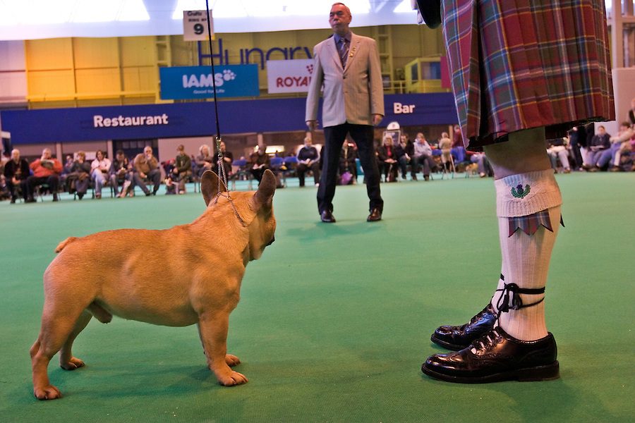 Birmingham, England, 11/03/2006..A French Bulldog and his Scottish owner under the eyes of a judge as over 22,000 dogs and their owners take part in Crufts Dog Show, the largest event of its kind in the world.