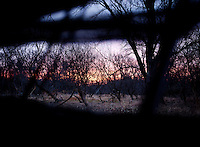 Morning sunrise is seen through a deer blind during a hunting trip in Superior, Nebraska, Thursday, December 1, 2011...Photo by Matt Nager