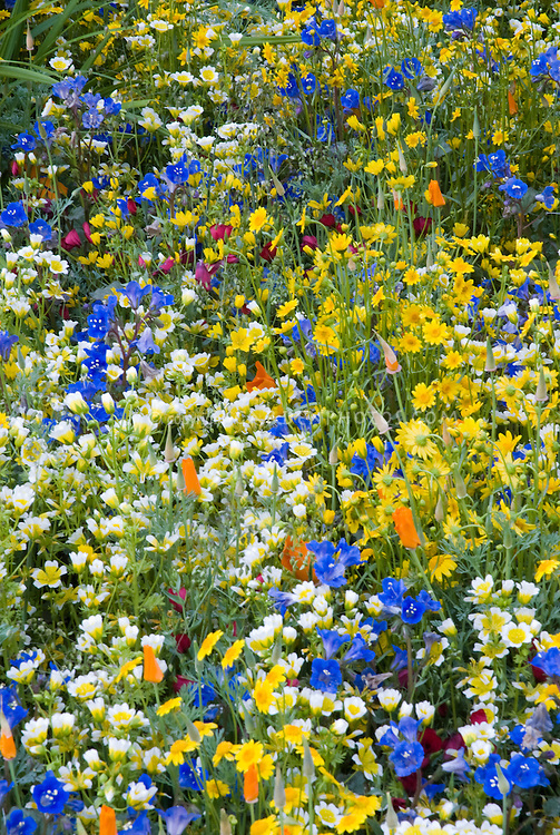 Wild flowers in lush bright colorful plants plant flower stock photography - Flowers native to greece a sea of color ...