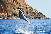Spinner Dolphin, Stenella longirostris, spin jump, Chichi-jima, Bonin Islands, Ogasawara Islands, Natural World Heritage Site, Tokyo, Japan, Pacific Ocean