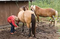 Wanderritt mit Pony in Nord-Norwegen, Mädchen kratzt die Hufen aus, Wander-Ausritt, Ausritt, Reiten