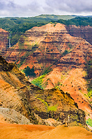 The Nene (pronounced 'nay-nay') , Branta sandvicensis, is an endemic land bird, an endangered species and Hawaii's state bird. Kauai's Waimea Canyon is the background, Hawaii., USA