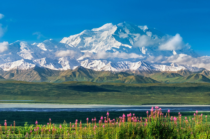 North Face Of 20, 3020+ Ft. Mt. Denali,  Fireweed, Denali National Park, Alaska