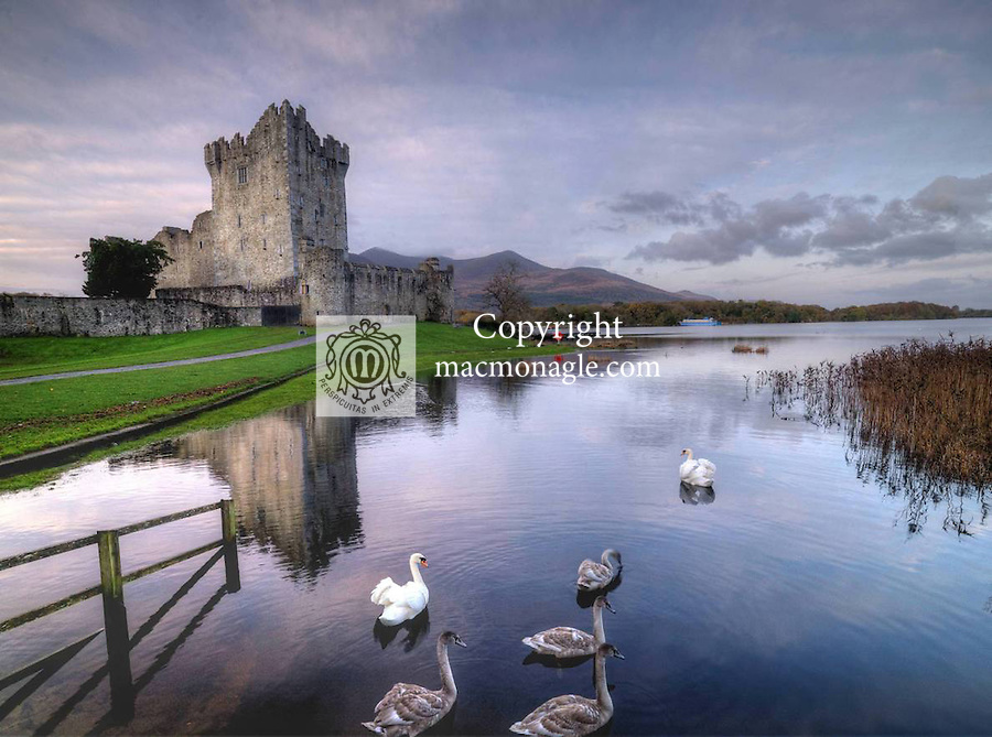 Swans float gently in peace in an early morning winter scene at Ross Castle, Killarney on Friday..Picture by Don MacMonagle