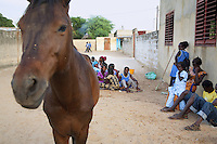 Senegal. Province of Thies. Village Thienaba Seck. A horse and a group of schoolboys and schoolgirls.  4.12.09 © 2009 Didier Ruef