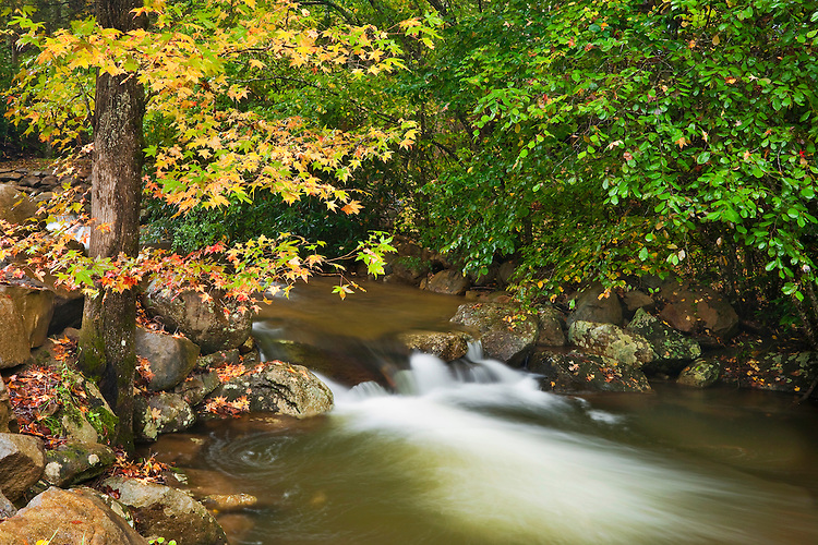 Fall color scene along the Little Pigeon River; Great Smoky Mountains National Park, TN