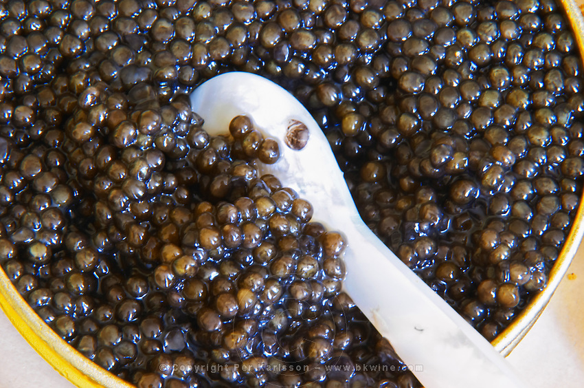 "A tin of black caviar with slices of bread and a spoon of mother-of-pearl to scoop up the precious eggs  ""Caviar et Prestige"" Saint Sulpice et Cameyrac  Entre-deux-Mers  Bordeaux Gironde Aquitaine France - at Caviar et Prestige"