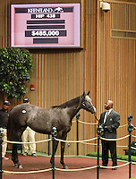 September 10, 2014: Hip #438 Tapit - Amansara filly consigned by Hill 'n' Dale Sales sold for $485,000 at the Keeneland September Yearling Sale.   Candice Chavez/ESW/CSM