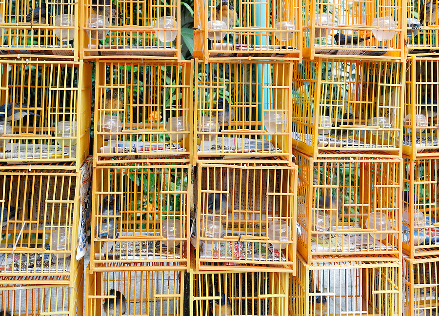 Songbirds in bird cages for sale in Yuen Po Street Bird Garden, Kowloon, Hong Kong SAR, People's Republic of China, Asia