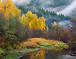 Wenatchee National Forest, Washington:<br /> Rising mist and fog in the autumn forest of the Cascate mountains