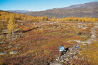 Female hiker hiking through autumn mountain landscape along Kungsleden trail, Lappland, Sweden