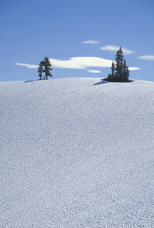 Trees on snowy hillside, Olympic National Park, Washington