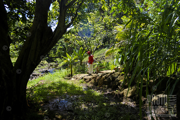 A man wearing a red shirt pauses near a railing amid tropical foliage at McBryde gardens, near Poipu, Kauai,  which are part of the 5 National Tropical Botanical gardens in the US.