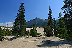 Carcross Desert in The Yukon, Canada