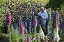 07/07/15<br /> <br /> Head Gardener, Trevor Jones, inspects Ironweed or Bluebottle/Echium vulgare which can cause a slow death from liver damage with poisonous foxgloves in the foreground.<br /> <br /> The Poison Garden, Alnwick Garden.<br /> <br /> All Rights Reserved: F Stop Press Ltd. +44(0)1335 418629   www.fstoppress.com.