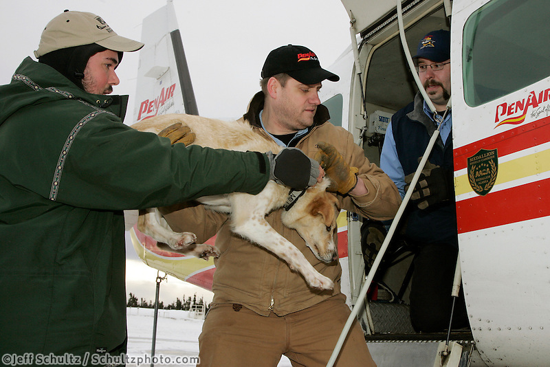 Veterinarian David Palmini hands a dropped dog to PenAir pilot Bill Batman and then co-pilot Travis Roenfanz to head back to Anchorage.