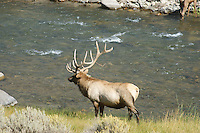 Elk-Rocky Mountain-Water