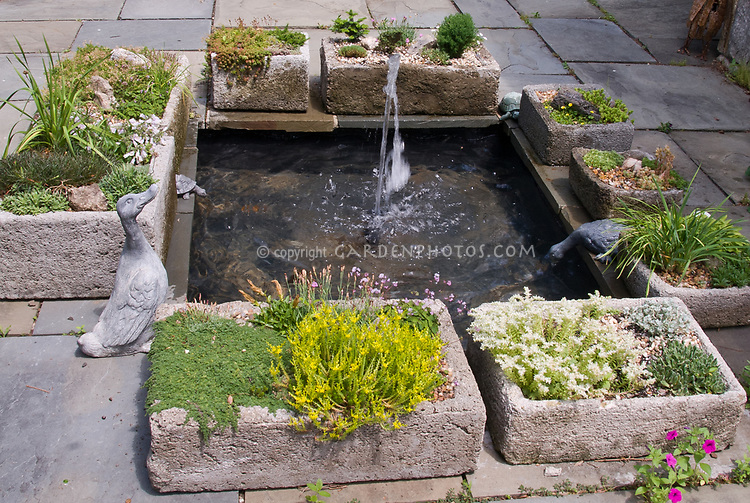 Trough Gardens Around Water Feature Plant Flower Stock