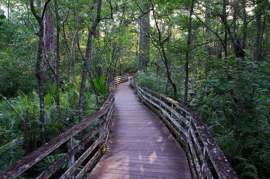 Boardwalk at Corkscrew Swamp Sanctuary, Naples, Florida, US