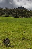 France, île de la Réunion, Parc national de La Réunion, classé Patrimoine Mondial de l'UNESCO,  prairies d'altitude de la Plaine des Cafres, // France, Reunion island (French overseas department), Parc National de La Reunion (Reunion National Park), listed as World Heritage by UNESCO , Mountain pasture of the Plaine des Cafres,