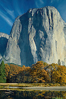 Merced River black oaks and El Capitan<br />