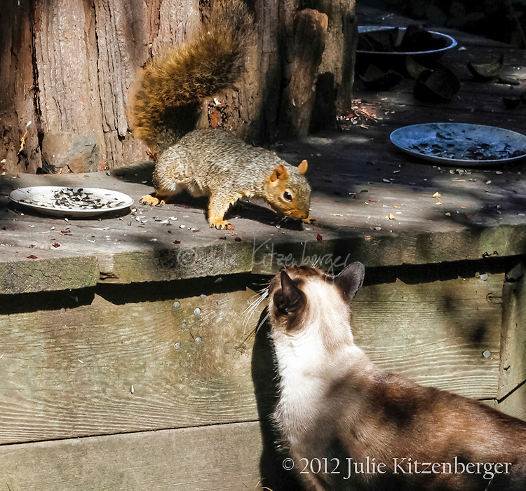 2012-09-3_Coco-Squirrels