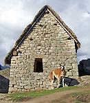 Lama in front of ruins at Machu Picchu near Cusco, Peru.