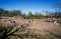Austin's Norwood Estate Dog Park is an off-leash dog park with a a smaller puppy area and a large shaded main area where dogs may roam freely