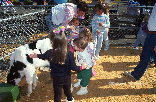 Kids with baby cow at county fair