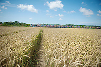 peloton plowing through the cornfields of Northren France<br /> <br /> 2014 Tour de France<br /> stage 4: Le Touquet-Paris-Plage/Lille M&eacute;tropole (163km)
